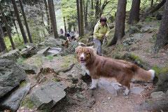Mantrailing+Wandern Rhön,T-Dogs,30.4.-3.5.2015 Foto Nr.9