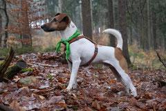 Herzberg und Limes,T-Dogs,6.12.2014, Foto Nr.10