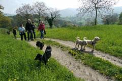 Bensheimer Weinlagen, T-Dogs, 5.5.13, Foto Nr.2