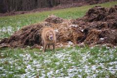 Irrbachquelle,T-Dogs,26.1.14, Foto Nr.15