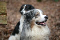 Gimbi,Staufen,Kaisertempel,T-Dogs,2.2.2014, Foto Nr.11