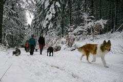Altkönig,T-Dogs,01.2.2014, Foto Nr.21