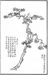Les pins de Ma Yuan sont souvent représentés maigres et durs comme du fer recourbé.
