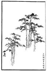 Les pins de Wang Chou-ming sont le plus souvent dessinés avec aisance.