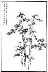 Wang Chou-ming représentait presque toujours les grands pins avec des troncs droits. Quant  à ses feuilles, si on les compare aux autres maîtres, elles sont plus longues. Bien que (en apparence) confondues et en désordre, elles sont faites avec méthode.