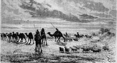 Les troupeaux dans le Gobi