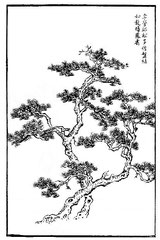 Les pins de Li Ying-k'ieou ont souvent l'apparence du dragon qui se replie ou du phénix qui vole en tournoyant.