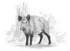 'Wildschwein' Bleistift DinA 5 (2017)