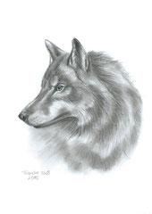 'Wolf' Kohle DinA 5 (2015)
