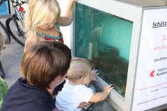 Eine Attraktion für die Kleinen die 303 Elritzen im Aquarium