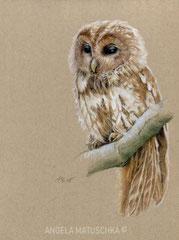'Contemplative Owl', colored pencil, 2018