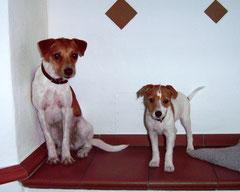 Maya (11 Wo.)  & Abby