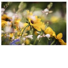 Sommerblumen 2017
