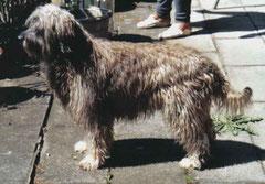 mein ertser Hund Pancho