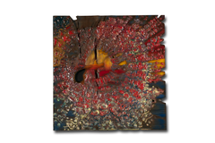 "Thomas Girbl ""burningdiscovery-4163"" 50x50cm 2013"