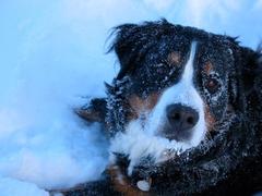 ........ je mehr Schnee, umso besserer wir hatten eine viel zu kurze aber schöne Zeit