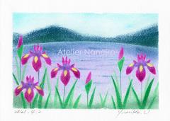 湖畔の菖蒲