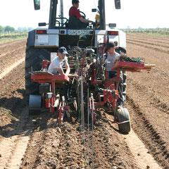 Die Reben und Pflanzpfählchen werden einzeln in die Maschine gelegt
