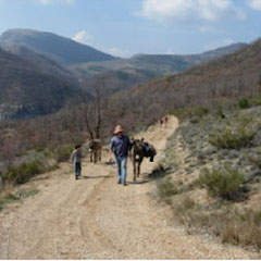A walk with the donkeys on the Travers fountain trail
