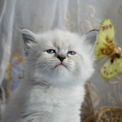Амира Чары Невы