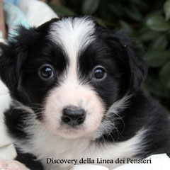 maschio bianco e nero /boy biblack    disponibile/ available