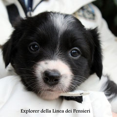 femmina bianca e nera/girl black and white  prenotata/reserved