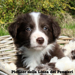 maschio/boy bianco e rosso / red and white disponibile/available