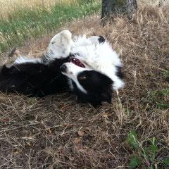 libero di rotolarsi nell'erba