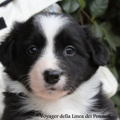 femmina bianca e nera/ girl black and white prenotata/reserved