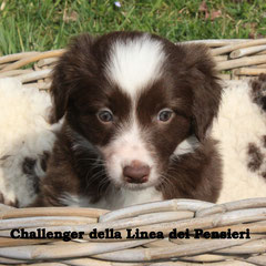 femmina/girl bianca e rossa/ red and white disponibile/available
