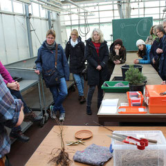 Jens Wiedenfeld (links) führt den Besuchern der AG Botanik die Kunst des Veredelns vor