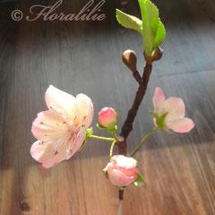 Kirschblüten aus Zucker 2012 von Floralilie