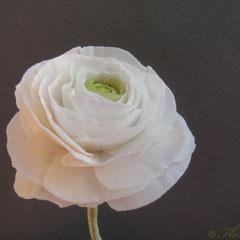 Ranunkel aus Zucker 2012 von Floralilie