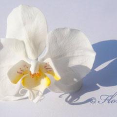 Weiße Zuckerorchidee von Floralilie 2012