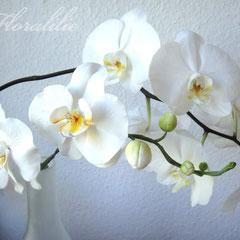 Weiße Zuckerorchidee von Floralilie 2010 - Nur die vorderen Orchideen sind aus Zucker. Die Hinteren sind die echten Vorlagen.