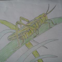 """Ілюстація до вірша Дж. Кітса """"Про коника та цвіркуна"""" учениці 5 класу Бочелюк Світлани"""