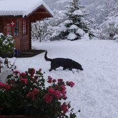 Jess geniesst den tollen ersten Schnee