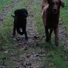 Day und Iro im Wald