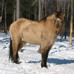 Aramis avec sa fourrure d'hiver