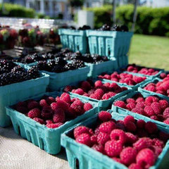 Virginia Beach grown berries