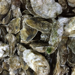 Virginia Oysters value added agriculture