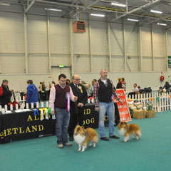 BIS & RBIS Shetland Sheepdog Open Club Show- Left: JUN CH, CJW 12 IRISH LEGEND OF NAVARREM (Mr E & Mr P Castillo & Fortune)  Right: CH TOORALIE'S EDITON DE LUXE AT FEARNACH JNR CH (Damian D Mc Donald) March 2013