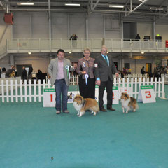 Combined Canine All Breed Int. Ch. Show 30th March 2013- Left:Best Of Breed  JUN CH, CJW 12 IRISH LEGEND OF NAVARREM (Mr E & Mr P Castillo & Fortune)  Right: Reserve Best Of Breed  CH FEARNACH XIT TO HEAVEN (Damian D Mc Donald)