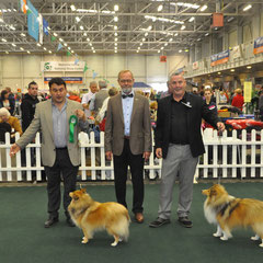I.KC. All Breed International Show Day 1 05.10.2013 Left Green Star Bitch & BOB NAVARREM FORTUNE LADY JR CH (Mr E & Mr P Castillo & Fortune)  Right Green Star Dog JUN CH, CJW 12 IRISH LEGEND OF NAVARREM (Mr E & Mr P Castillo & Fortune)