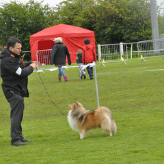 Newtownards & Dist Canine Club 12th May 2013- Best of Breed was JUN CH, CJW 12 IRISH LEGEND OF NAVARREM (Mr E & Mr P Castillo & Fortune)- Reserve Best of Breed was CHAMPION FEARNACH FROSTY MOON AT LONGRANGE  (Mrs. C Dunne)Newtownards & Dist Canine Club 12