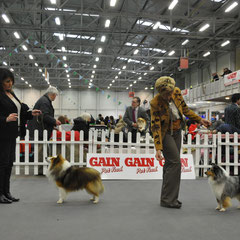 IKC Celtic Winner Show 16th March 2013-  Left : Best Of Breed  JAPARO DESIGNED TO DAZZLE AT LONGRANGE CJW11 JUN CH (Mrs. C Dunne)  Right : Reserve Best Of Breed  CHAMPION FEARNACH FROSTY MOON AT LONGRANGE JUN CH CJW11 CW11 (Mrs. C Dunne)