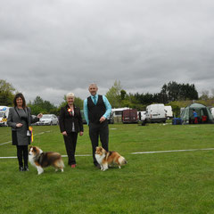 Hibernian All Breed Ch Show May 2013 Left Green Star Dog JAPARO DESIGNED TO DAZZLE AT LONGRANGE CJW11 JUN CH CW13 (Mrs. C Dunne)  Right Green Star Bitch & BOB LONGRANGE SCARLET OHARA JUN CH (Mrs. C Dunne)