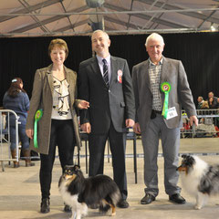 Portadown All Breed Ch Show 13th April 2013- Left: Best Of Breed  CH MYTER EYE TO EYE JW (Mrs M & Miss S Thomas)   Right: ARDLYN CHARLEY HARPER (Mr G Davis)