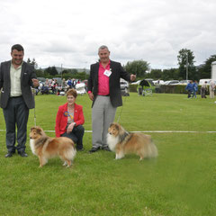 Bangor & North Dog Canine Club All Breed  LEFT BOB & GS Bitch NAVARREM FORTUNE LADY JR CH (Mr E & Mr P Castillo & Fortune)  - RIGHT : RBOB & GS Dog CH JUN CH, CJW 12 IRISH LEGEND OF NAVARREM (Mr E & Mr P Castillo & Fortune)