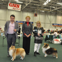 I.KC. All Breed International Show Day 2- 06.10.2013 Left Green Star Bitch & BOB NAVARREM FORTUNE LADY JR CH (Mr E & Mr P Castillo & Fortune)  Right Green Star Dog CH SEVENOAKS GOLD EDITION CW11 AN CH. '11 '12 CW 11 (Joe & Brenda Doyle)